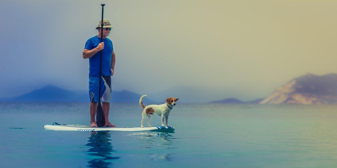 SUP dog, így evezz kutyával!